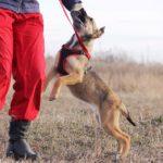 Айрис собака из приюта на пристройство приют для бездомных животных Зов Предков zovpredkov.net фото 9