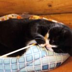 Крафт кот из приюта на пристройство, частный приют Зов Предков zovpredkov.net фото 8