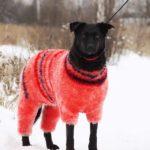 Хейли собака из приюта на пристройство, частный приют Зов Предков zovpredkov.net фото 2