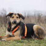 Липтон собака из приюта на пристройство, частный приют Зов Предков zovpredkov.net фото 10