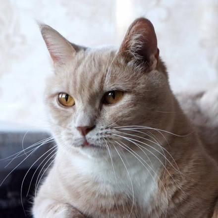 Абрикос кот из приюта для бездомных животных Зов Предков на пристройство  zovpredkov.net