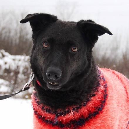 Хейли собака из приюта на пристройство, частный приют Зов Предков zovpredkov.net