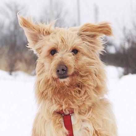 Ларсик собака из приюта на пристройство, частный приют Зов Предков zovpredkov.net