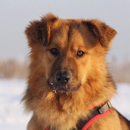 Рим собака из приюта на пристройство, частный приют Зов Предков zovpredkov.net