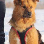 Рим собака из приюта на пристройство, частный приют Зов Предков zovpredkov.net фото 5