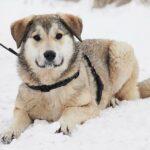 Нева собака из приюта на пристройство, частный приют Зов Предков zovpredkov.net фото 7