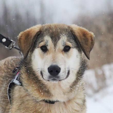 Нева собака из приюта на пристройство, частный приют Зов Предков zovpredkov.net