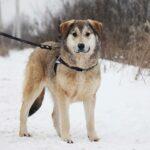 Нева собака из приюта на пристройство, частный приют Зов Предков zovpredkov.net фото 3