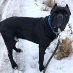 Тайгер собака из приюта на пристройство частный приют для бездомных животных Зов Предков zovpredkov.net фото 3