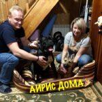 Айрис дома! частный приют для бездомных животных Зов Предков zovpredkov.net фото 1