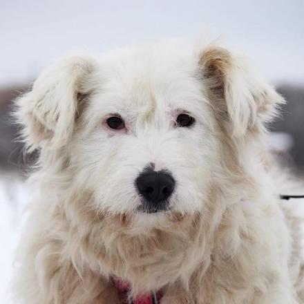 Бетти собака из приюта на пристройство, частный приют для бездомных животных Зов Предков zovpredkov.net