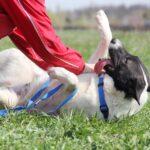 Рулет собака из приюта на пристройство, частный приют Зов Предков zovpredkov.net фото 9