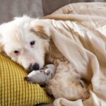 Бетти собака из приюта на пристройство, частный приют для бездомных животных Зов Предков zovpredkov.net фото 5