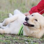 Голди собака из приюта на пристройство, частный приют для бездомных животных Зов Предков zovpredkov.net фото 5
