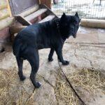 Тайгер собака из приюта на пристройство частный приют для бездомных животных Зов Предков zovpredkov.net фото 2