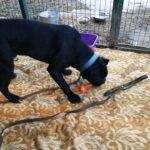 Тайгер собака из приюта на пристройство частный приют для бездомных животных Зов Предков zovpredkov.net фото 1