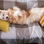 Бетти собака из приюта на пристройство, частный приют для бездомных животных Зов Предков zovpredkov.net фото 3