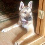 Айрис дома! частный приют для бездомных животных Зов Предков zovpredkov.net фото 7