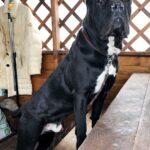 Тайгер собака из приюта на пристройство частный приют для бездомных животных Зов Предков zovpredkov.net фото 4