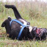 Тайгер собака из приюта на пристройство частный приют для бездомных животных Зов Предков zovpredkov.net фото 63