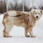 Бетти собака из приюта на пристройство, частный приют для бездомных животных Зов Предков zovpredkov.net фото 2