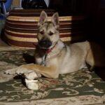 Айрис дома! частный приют для бездомных животных Зов Предков zovpredkov.net фото 3