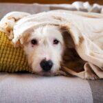 Бетти собака из приюта на пристройство, частный приют для бездомных животных Зов Предков zovpredkov.net фото 7