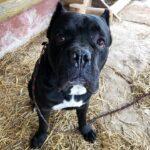 Тайгер собака из приюта на пристройство частный приют для бездомных животных Зов Предков zovpredkov.net фото 6