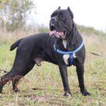 Тайгер собака из приюта на пристройство частный приют для бездомных животных Зов Предков zovpredkov.net фото 8