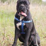 Тайгер собака из приюта на пристройство частный приют для бездомных животных Зов Предков zovpredkov.net фото 10