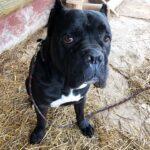 Тайгер собака из приюта на пристройство частный приют для бездомных животных Зов Предков zovpredkov.net фото 5