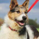 Амели собака из приюта на пристройство, частный приют для бездомных животных Зов Предков zovpredkov.net фото 16