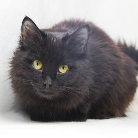 Фантом кот из приюта на пристройство приют для бездомных животных Зов Предков zovpredkov.net