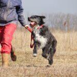 Алмаз собака из приюта на пристройство, частный приют для бездомных животных Зов Предков zovpredkov.net фото 1
