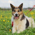 Амели собака из приюта на пристройство, частный приют для бездомных животных Зов Предков zovpredkov.net фото 15