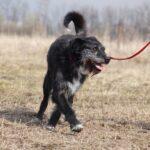 Алмаз собака из приюта на пристройство, частный приют для бездомных животных Зов Предков zovpredkov.net фото 4
