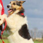 Амели собака из приюта на пристройство, частный приют для бездомных животных Зов Предков zovpredkov.net фото 10