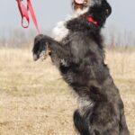 Алмаз собака из приюта на пристройство, частный приют для бездомных животных Зов Предков zovpredkov.net фото 2