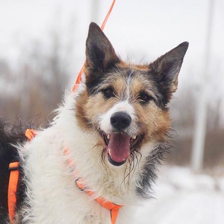 Амели собака из приюта на пристройство, частный приют для бездомных животных Зов Предков zovpredkov.net