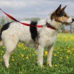 Амели собака из приюта на пристройство, частный приют для бездомных животных Зов Предков zovpredkov.net фото 14