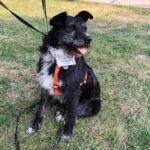 Алмаз собака из приюта на пристройство, частный приют для бездомных животных Зов Предков zovpredkov.net фото 9