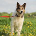 Амели собака из приюта на пристройство, частный приют для бездомных животных Зов Предков zovpredkov.net фото 9