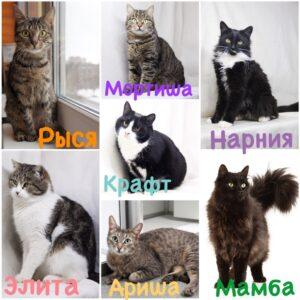 "Котики из приюта Зов Предков едут на выставку ""Всем по котику"" фото zovpredkov.net"