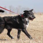 Алмаз собака из приюта на пристройство, частный приют для бездомных животных Зов Предков zovpredkov.net фото 3