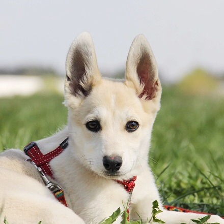 Баунти собака из приюта на пристройство. частный приют для бездомных животных Зов Предков zovpredkov.net