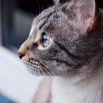 Сапфир кот из приюта на пристройство приют для бездомных животных Зов Предков zovpredkov.net фото 5