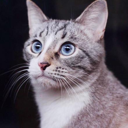 Сапфир кот из приюта на пристройство частный приют для бездомных животных Зов Предков zovpredkov.net