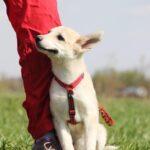Баунти собака из приюта на пристройство, частный приют для бездомных животных Зов Предков zovpredkov.net фото 4