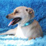 Бисквит собака из приюта на пристройство, частный приют для бездомных животных Зов Предков zovpredkov.net фото 1