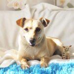 Бисквит собака из приюта на пристройство, частный приют для бездомных животных Зов Предков zovpredkov.net фото 4